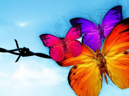 Free Butterfly Backgrounds - Colourful ...