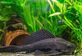 High Quality Aquarium Beleuchtung