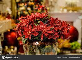 Roter Künstlicher Weihnachtsstern Blüten Geschmückt Mit