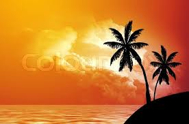 silhouette of palm trees on seacoast at sunset stock photo colourbox