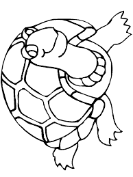 Small Picture Turtle coloring page Turtle free printable coloring pages animals