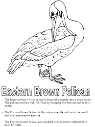Small Picture Eastern Brown Pelican coloring page