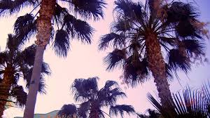 palm trees tumblr. Pink Palm Trees! By London-Dreamer Trees Tumblr