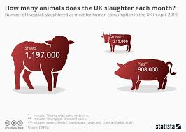 How Many Animals Does The Uk Slaughter Each Month Here Is
