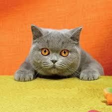 Risultati immagini per cats