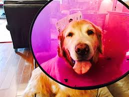 Skin Allergies in Pets | Vet Around Town | Mobile Vet in Austin TX ...