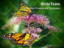 Monarch Butterfly Flowers Nature Powerpoint Templates Ppt Themes A ...