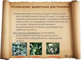 Реферат ядовитые растения первая помощь при отравлении Реферат ядовитые растения первая помощь при отравлении растениями Москва