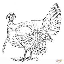 wild turkey coloring pages. Wonderful Pages Permalink To New Wild Turkey Coloring Pages Printable With L