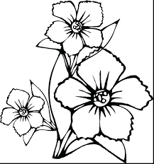 Flower Outlines For Coloring Flower Outline Printable Unique ...