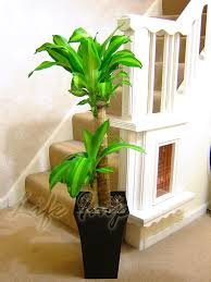 office pot plants. 1 Large Indoor Office House Tree Milano Gloss Pot Palm Plants