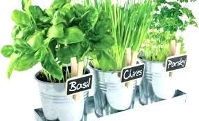 herb garden starter kit home depot outdoor herb garden kit herb garden kit how to start herb garden starter kit