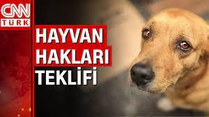 İşte beklenen hayvan hakları yasası geliyor - YouTube