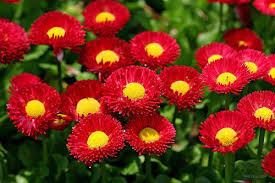 most beautiful flowers wallpapers top