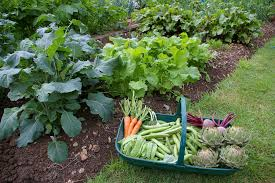 how to prepare soil for vegetable garden