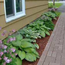 Small Picture Hostas and columbine Landscape Hosta Design Ideas Pictures