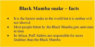 Image result for black mamba snake