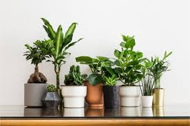 29 best houseplants for beginners that