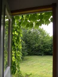 looking out front door. Full Image For Cool Out The Front Door 110 Every Memory Of Looking O