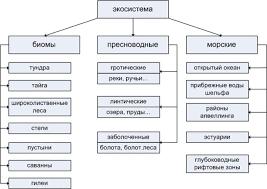 Реферат Экологические системы  Реферат Экологические системы 3