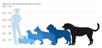 Dog Breed Size Chart Goldenacresdogs Com