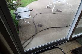 i ll spike the patio with more ed broken sunflower seeds and see if he is a local and get more photos his pas look familiar