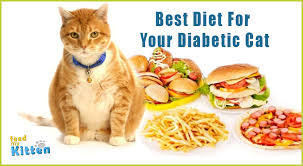 best food for diabetic cat. Feedmykitten-com_best-diet-for-your-diabetic-cat_featured Best Food For Diabetic Cat
