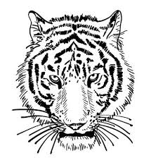 tiger black and white drawing. Plain White Artwork Of Tiger Face Portrait Head Silhouette Black And White Sketch  Digital Drawing And Tiger Black White Drawing N