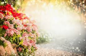 outdoor backgrounds. Main \u203a Backgrounds Flowers Floral Outdoor Background 12 JPG Images,  6000x4000 Px, Free Download Outdoor Backgrounds