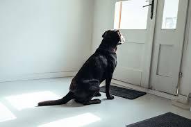 1:03 reise fee 49 010 просмотров. Hund Alleine Lassen Training Bei Trennungsangst Zooplus