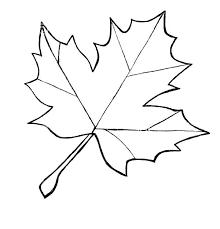 maple leaf printable template leaves coloring pages color page temp