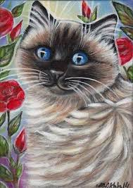 Small Picture 100 best Ragdoll images on Pinterest Cat stuff Cats and Animals