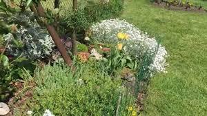 Осигурете широки пътеки за преминаване през цветните лехи, за да могат гостите ви да се разхождат из градината ви и да й се радват. Nyakolko Idei Za Krasiva Gradina Youtube