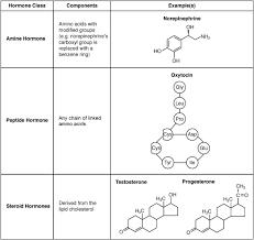 17 2 Hormones Anatomy Physiology