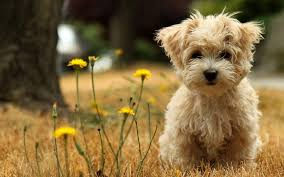 Puppy Desktop Wallpapers - Top Free ...