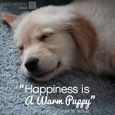 5 Inspirational Pinterest Pet Quotes - Petcentric by Purina