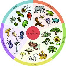 Biodiversity Classification Chart Classification Of Living Things Biodiversity Siyavula