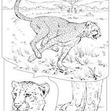 Small Picture Coloring Pages Wildlife Research Conservation Coloring Coloring