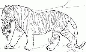Small Picture Tiger Coloring Sheet 2017 16843 Pages 86 In Free Best Of Cubs