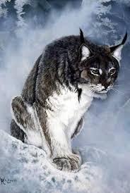 lynx size ray whitson lynx lynx snow and portraits
