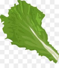 lettuce clipart. Fine Lettuce Free Download Iceberg Romaine Vegetable Clip Art On Lettuce Clipart F