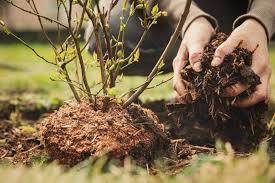 no dig gardening an easier way to grow