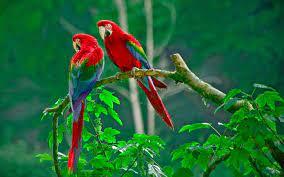 Jungle Wild #Parrots 3D #Desktop ...