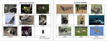 diurnal animals list for kids. Delighful List NocturnalDiurnalAnimals On Diurnal Animals List For Kids Homeschool Den