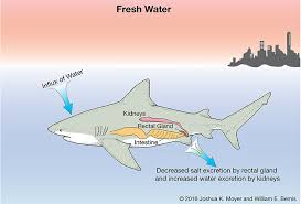 bull shark diagram inside quick start guide of wiring diagram • bull shark diagram inside wiring diagram libraries rh w60 mo stein de shark fin diagram tiger shark diagram