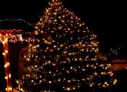 christmas lights outdoor trees warisan lighting. Outdoor Light Trees Christmas Home Design Lights Warisan Lighting