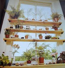 over window shelf shelf like this over your kitchen sink keep your plants away from window over window shelf
