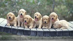 Cute dog desktop picture wallpaper ...