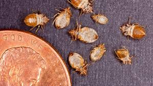 Bed Bugs In Bathroom Classy How Much Does Bed Bug Extermination Cost Angie's List