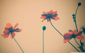 Flower Desktop Wallpaper Tumblr Hd